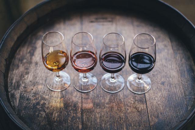 filtro prensa vino